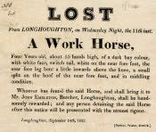 Reward for Lost Horse, Longhoughton - Click for bigger image